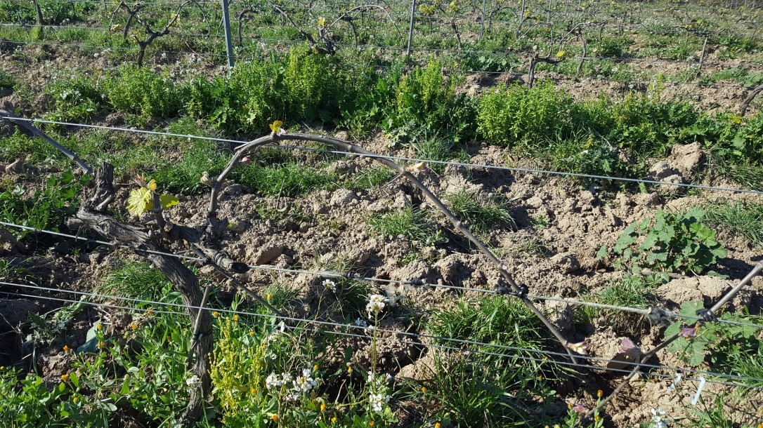bent vines