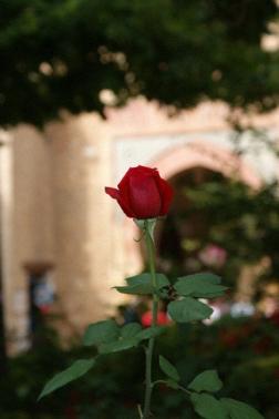 Granada_24