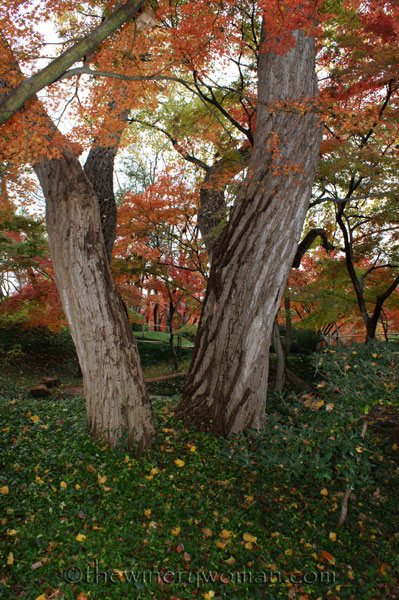 Japanese-Garden008