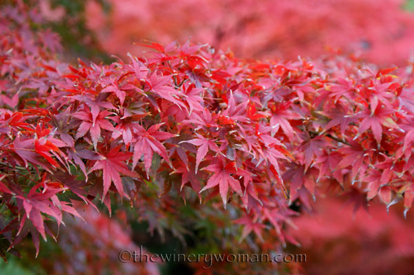 Japanese-Garden035