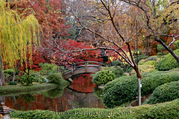 Japanese-Garden052