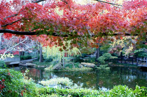 Japanese-Garden193
