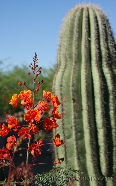 Arizona-flowers-and-cactus_TWW
