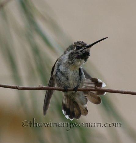 AZ-Birds_0070_TWW