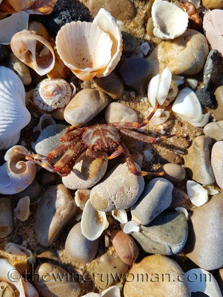 Beach-creature-2.15.18_TWW