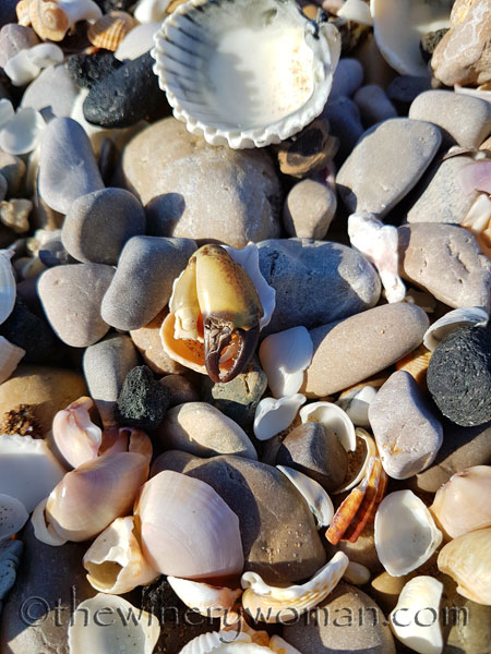 Beach-creature-claw-2.15.18_TWW
