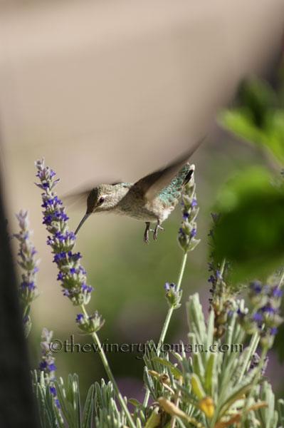 DSC08780_0678_AZ-Birds_TWW