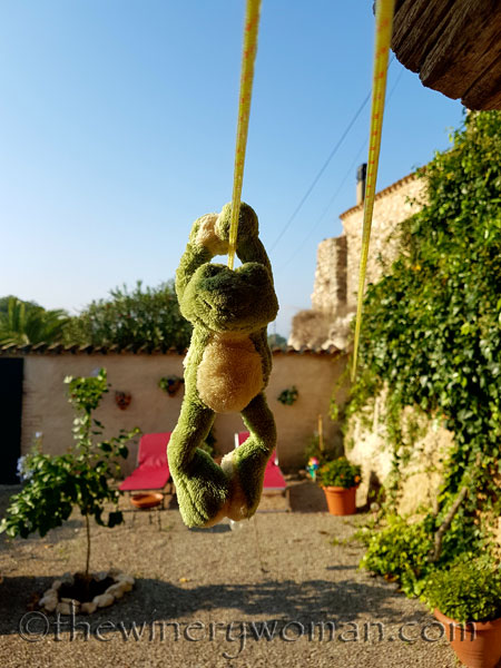 Friday-Frog-swinging-on-the-clothesline_TWW