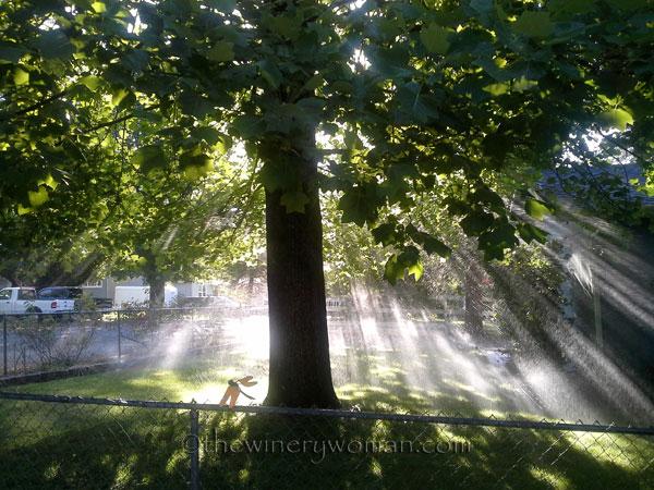 Rays-of-sunlight_TWW