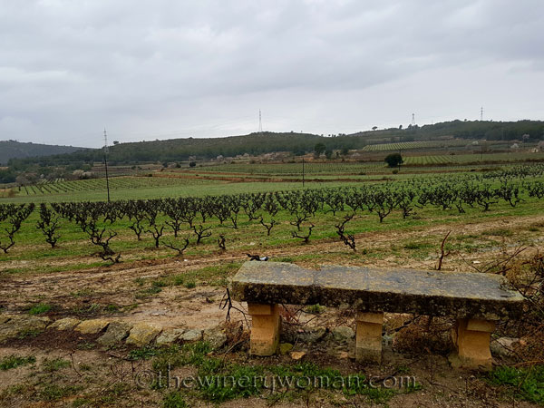 Viladellops-Vineyard_2.5.18_TWW