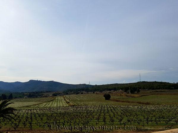 Vineyard13_2.15.18_TWW