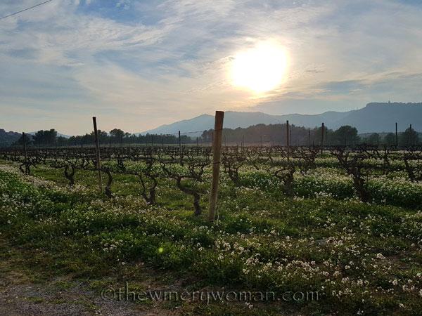 Vineyard19_2.15.18_TWW