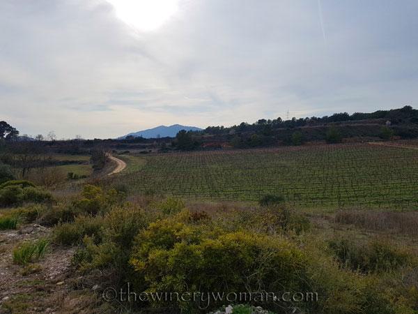 Vineyard9_2.15.18_TWW