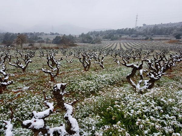 Vineyard_Snow_2.28.18_TWW