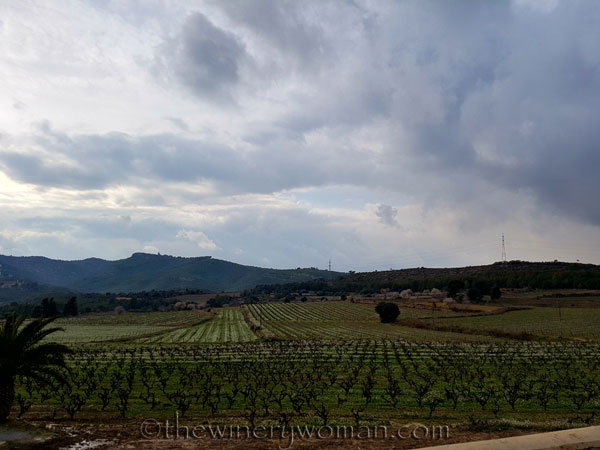 Winter_vineyard10_TWW