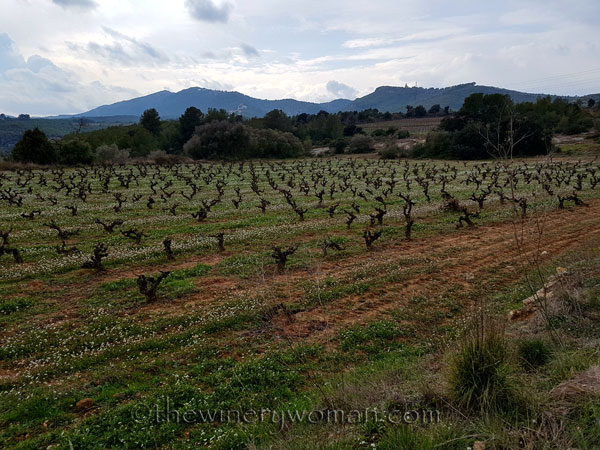 Winter_vineyard2_TWW
