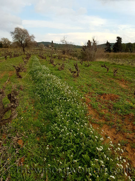 Winter_vineyard3_TWW