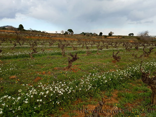 Winter_vineyard4_TWW