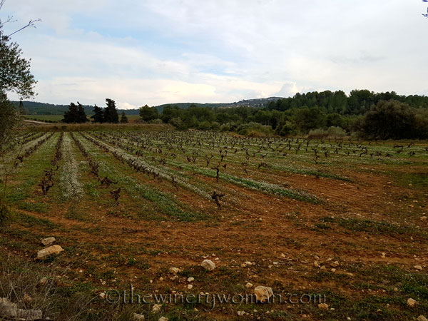 Winter_vineyard5_TWW