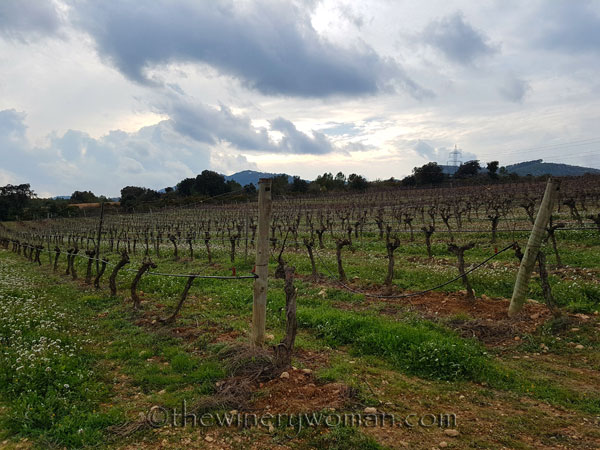 Winter_vineyard6_TWW