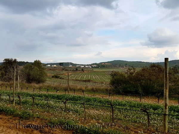 Winter_vineyard7_TWW