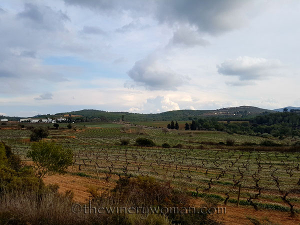 Winter_vineyard8_TWW