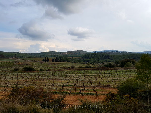 Winter_vineyard9_TWW