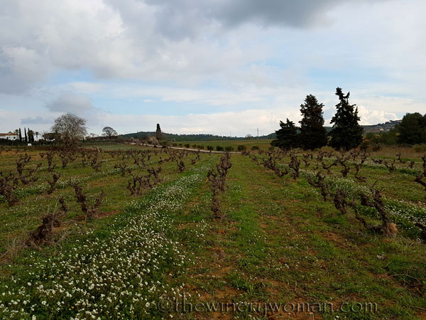 Winter_vineyard_TWW