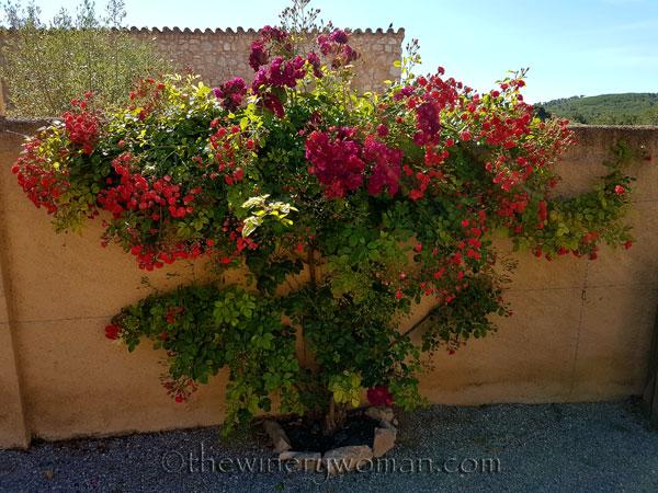Rose-bush_TWW