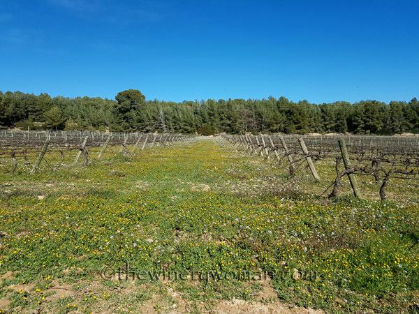 Vineyard17_3.10.18_TWW