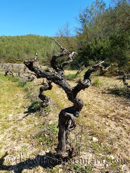 Vineyard5_3.29.18_TWW