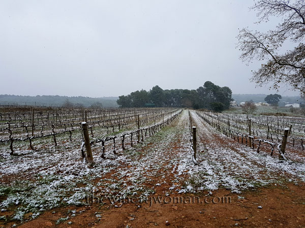 Vineyard_snow15_2.28.18_TWW