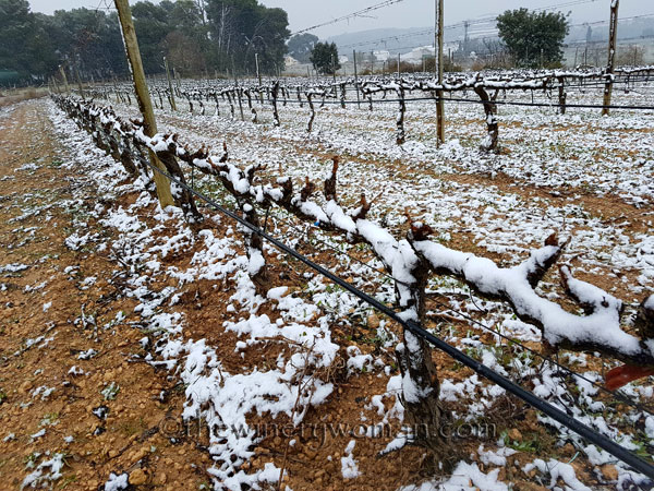 Vineyard_snow16_2.28.18_TWW