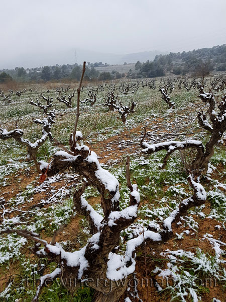 Vineyard_snow4_2.28.18_TWW
