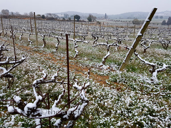 Vineyard_snow9_2.28.18_TWW
