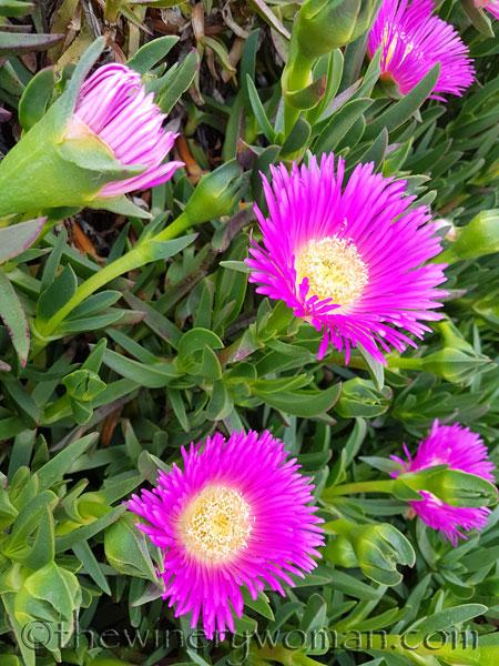 Flowers10_4.23.18_TWW