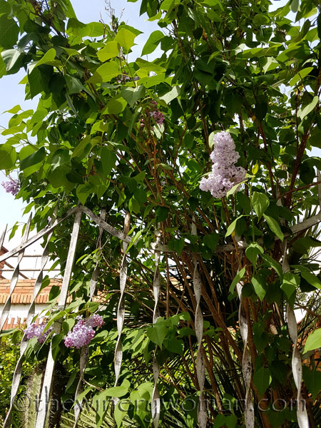 Flowers2_4.23.18_TWW