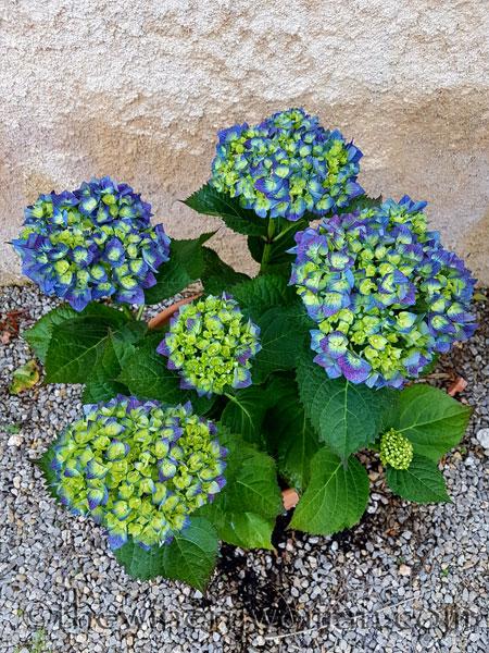 Garden-flowers12_4.26.18_TWW