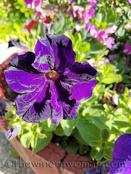 Garden-flowers19_4.26.18_TWW