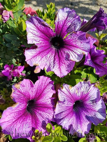 Garden-flowers20_4.26.18_TWW