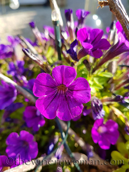 Garden-flowers21_4.26.18_TWW