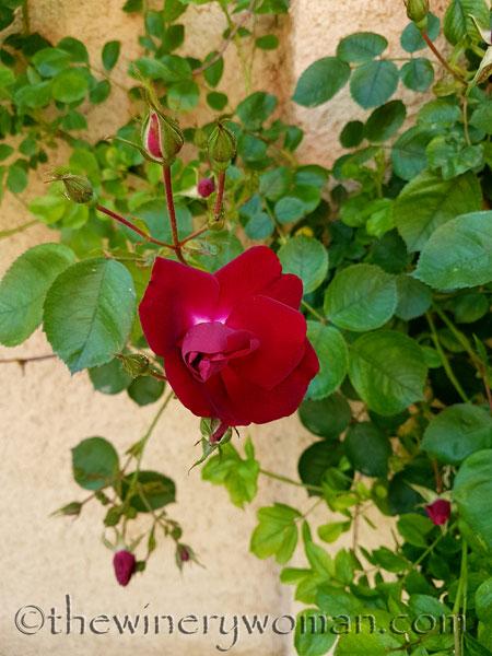 Garden-flowers2_4.26.18_TWW