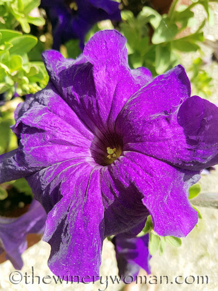 Garden-flowers_4.26.18_TWW