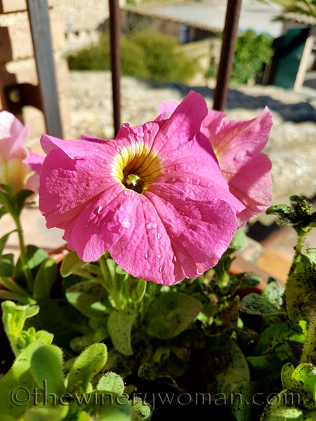 Garden4_4.4.18_TWW