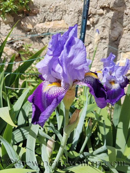 Iris2_4.20.18_TWW