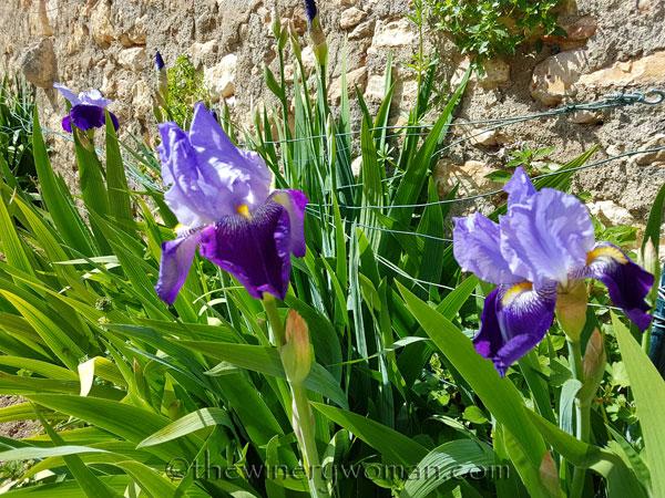 Iris3_4.20.18_TWW