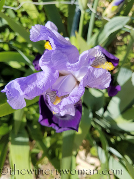 Iris4_4.20.18_TWW