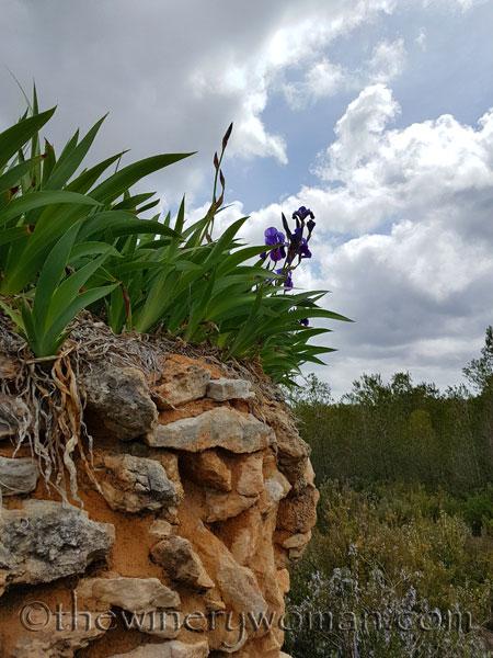 Irises10_4.10.18_TWW