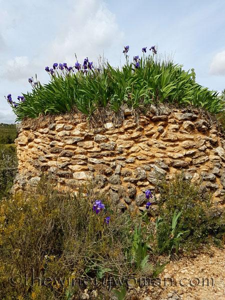 Irises15_4.10.18_TWW