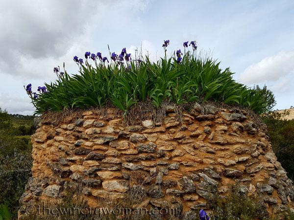 Irises17_4.10.18_TWW